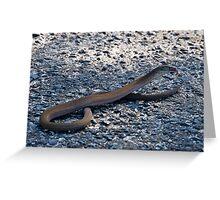 Legless lizard or a snake ? Greeting Card