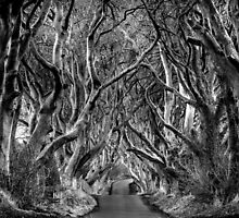 Dark Hedges by Dave Hare