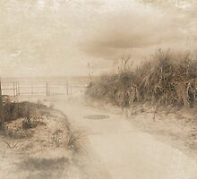Sands of Time by Susan Werby