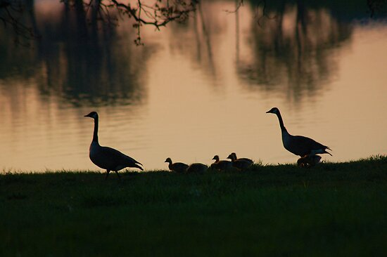 Family of 9 @ Sunset by Carla Wick/Jandelle Petters