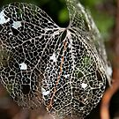 Rainforest leaf by Al Williscroft