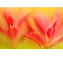 Red Plant Leaves - Abstract Photographic Print