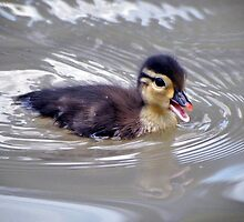 Baby Duck by Savannah Gibbs