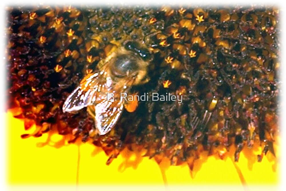 Bee up close by ♥⊱ B. Randi Bailey
