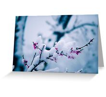 Snow On the Blossoms Greeting Card