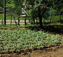 garden by slavikostadinov