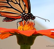 Long Beach, NY    Butterfly Topped Sunflower 023 by KarenDinan
