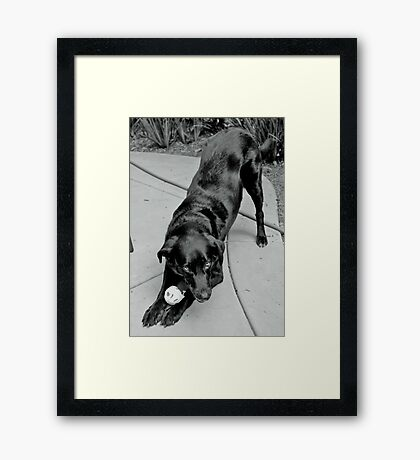 A Dog and Her Ball Framed Print
