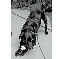A Dog and Her Ball Photographic Print