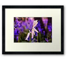 The only white one Framed Print