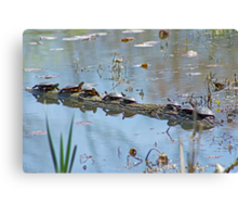 Reflecting On The Nice Spring Weather Canvas Print