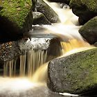 Padley Gorge, Derbyshire by Mick Gosling