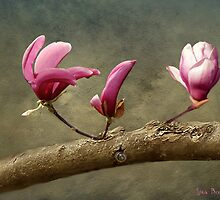 To taste your skin of magnolia. by © Kira Bodensted