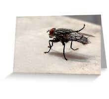 A Fly Resting Greeting Card