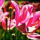 Field of Pink by Lynnette Peizer