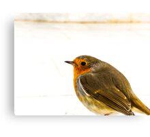 Bird Having A Rest Canvas Print