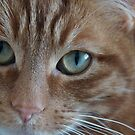 Ginger Cat by SophieGorner7