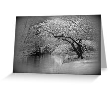 White Flowering Japanese Cherry Tree Greeting Card