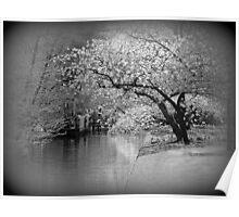 White Flowering Japanese Cherry Tree Poster