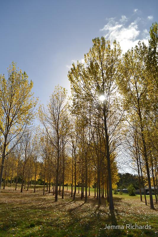Australias autumn open land by Jemma Richards