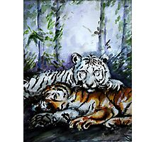 Tigers! Mother and Child Photographic Print
