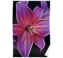 Precious Pink Lily Poster
