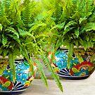 Ferns by Bonnie T.  Barry