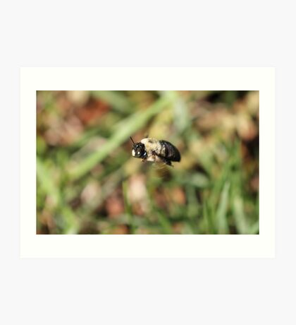Carpenter Bee Chilling Art Print