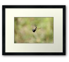 Just Buzzing about Framed Print