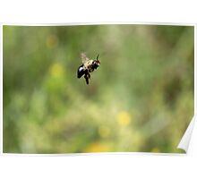 Bee-Ka-Boo Poster