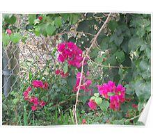 Wild Plant Poster