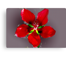Swamp hibiscus Canvas Print