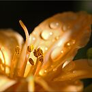 First Lily by Chet  King