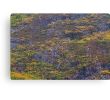 Fagus Trees on Cradle Mountain, Tasmania Canvas Print