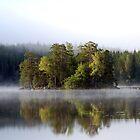 Misty morning by julie08