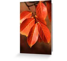 Autumn Richness Greeting Card