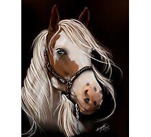 Soul Seeker Horse Art  Photographic Print