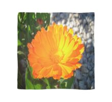 Bright Orange Marigold In Bright Sunlight Scarf