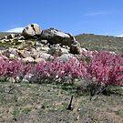 Spring in the Desert,Cold Springs,(Reno),NV USA by Anthony & Nancy  Leake