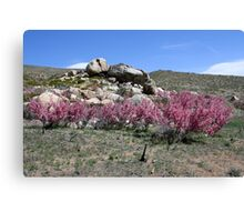 Spring in the Desert,Cold Springs,(Reno),NV USA Canvas Print