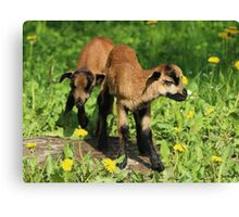 We Are Twins Canvas Print