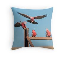 Galahs acting like galahs Throw Pillow