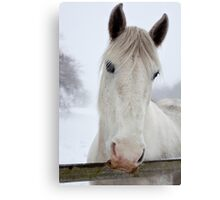 Hungry horse Canvas Print