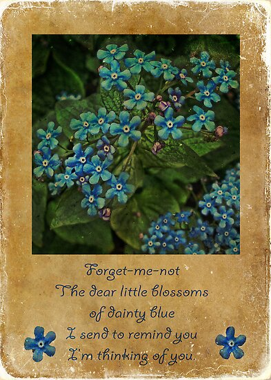Forget-me-not - greeting card by © Kira Bodensted