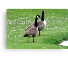 look what landed in my garden Canvas Print
