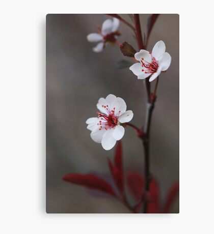 Plum Gorgeous ~ Canvas Print