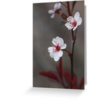 Plum Gorgeous ~ Greeting Card