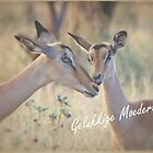 VIR MOEDERSDAG! by Magaret Meintjes