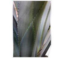 Agave Patterns Poster
