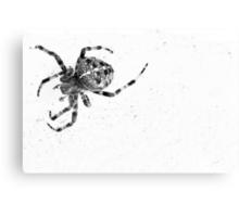 Spider No More Colour Canvas Print